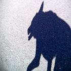 Devil Dog Shadow (thumb)